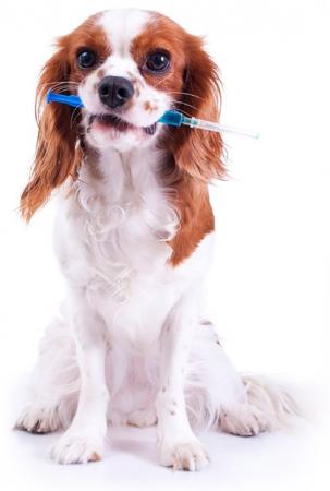 Campanha de vacinação para cães e gatos contra raiva acontece neste domingo