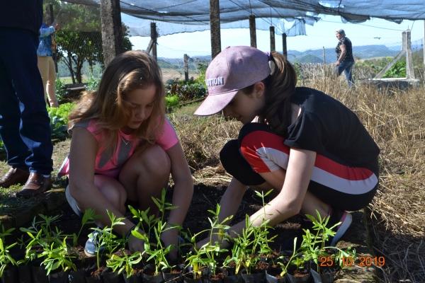 Mudas de crotalária foram cultivadas em projeto na Escola Dom Érico Ferrari